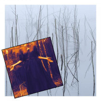 OLHAVA - Frozen Bloom + Never Leave Me Alone (Vinyls bundle)